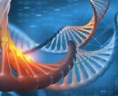 Thérapie génique de la maladie de Crigler-Najjar: un modèle à suivre